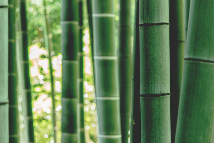 bamboo plants melbourne